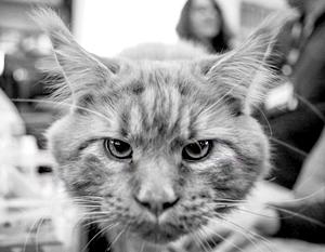 Коты стали жить дольше Кот, Продолжительность жизни, Ученые, Животные