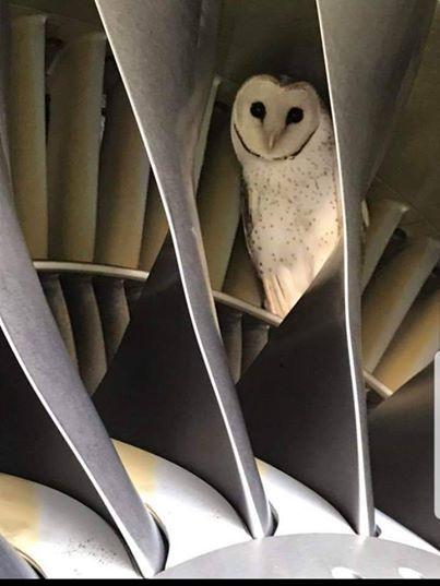В двигателе австралийского самолета завелась сова Сова, Самолет, Текст, Длиннопост