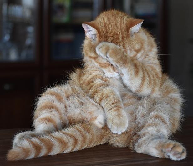 Кот и обрезки колбасы Кот, Собака, Колбаса, Длиннопост