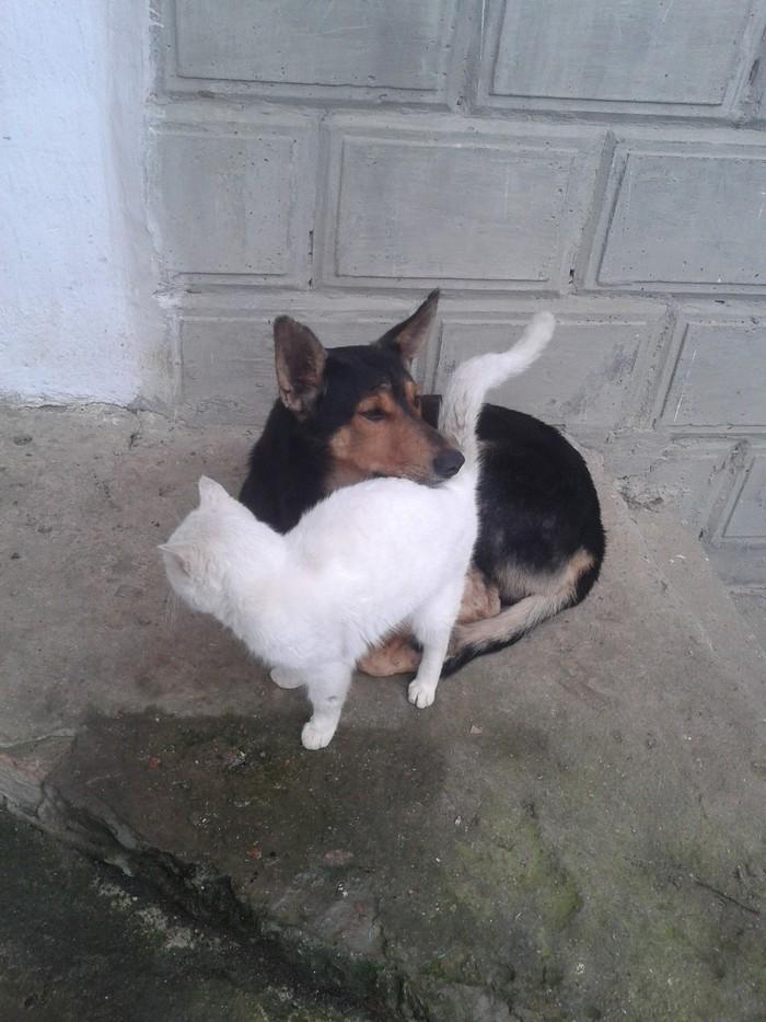 Улица их подружила... Животные, Дружба, Длиннопост, Кот, Собака