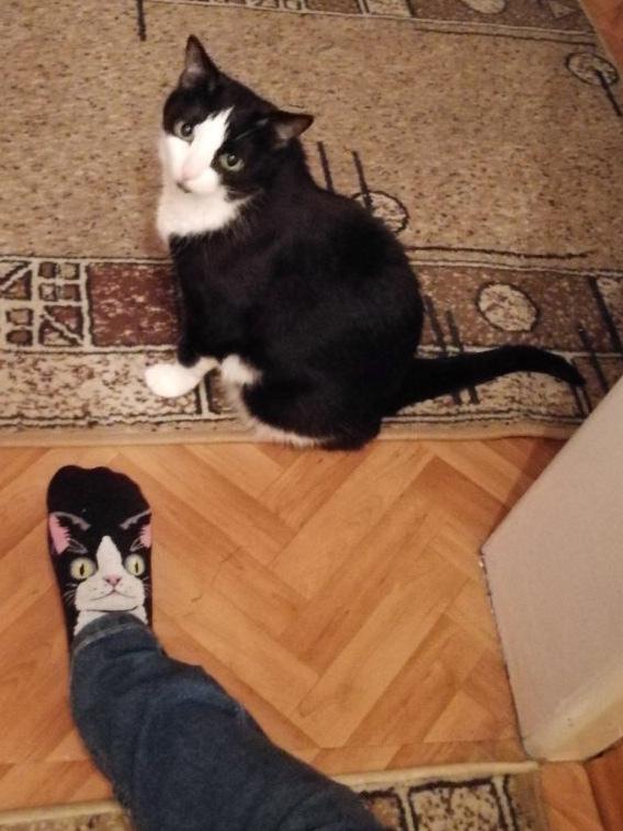Кот и носок Кот, Совпадение, Домашние животные
