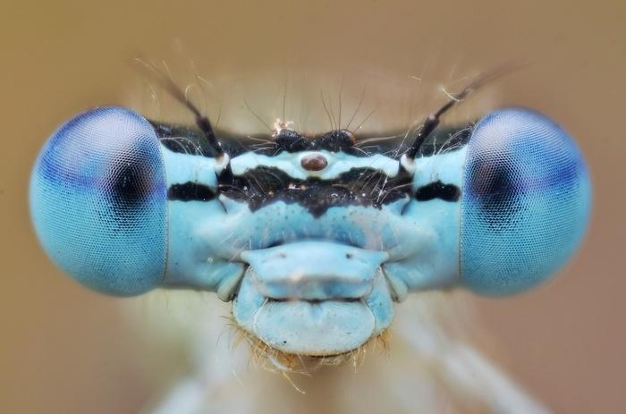 Самые милые насекомые на свете Насекомые, Милота, Фотография, Длиннопост