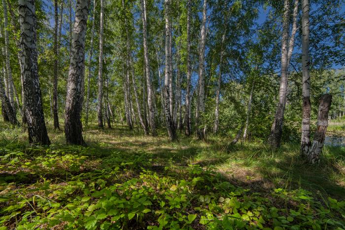 Майский лес Hdr, Пейзаж, Лето, Лес, Природа
