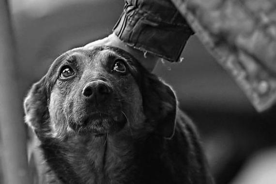 Скинул собаку с 4 этажа, а после забил ее палкой до смерти Зоозащитники, Барнаул, Собака, Без рейтинга, Негатив