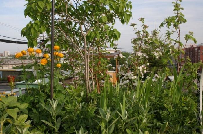 В Екатеринбурге уничтожили сад на крыше 9-этажки, который 18 лет назад разбил местный житель Екатеринбург, Управляющая компания, Сад, Дерево, Длиннопост, Крыша, Негатив