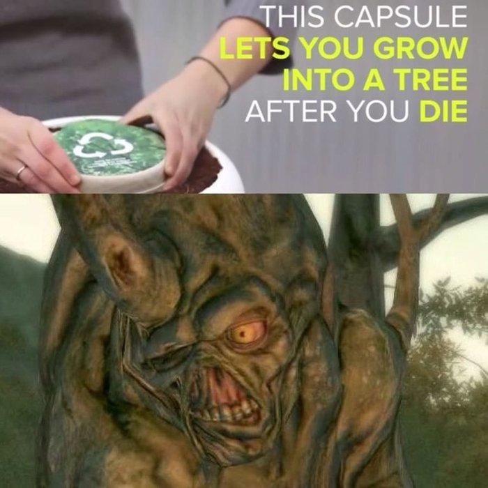 """""""Это капсула вырастит дерево после вашей смерти"""""""