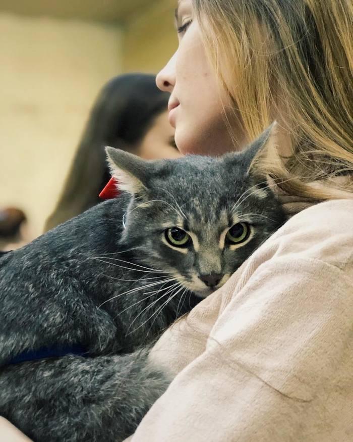 Безмолвный крик Кот, Зоокураторы, Домашние животные, Бездомные животные, Благотворительность, Усталость, Отчаяние, Длиннопост