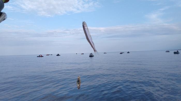 За корюшкой на Финский залив Корюшка, Рыбалка, Финский залив, Длиннопост, Санкт-Петербург