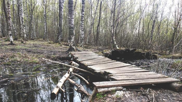 Мосток,парк Сосновка.Спб Мобильная фотография, Парк, Фотография, Санкт-Петербург, Болото
