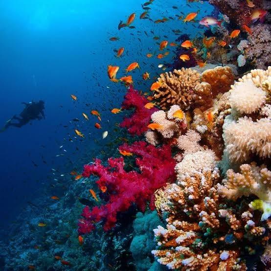 Национальный парк Рас Мохамед, Египет Море, Туризм, Путешествия, Дайвинг, Красота, Красота природы, Длиннопост