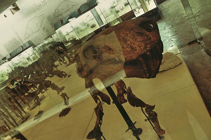 Северо-Двинская галерея профессора Амалицкого. Палеонтология, Наука, Окаменелости, Россия, История, Длиннопост, Музей