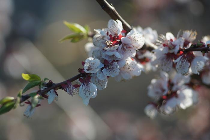 Весна на даче Начинающий фотограф, Весна, Гелиос 44-2, Юпитер-37, Без обработки, Sony a6000