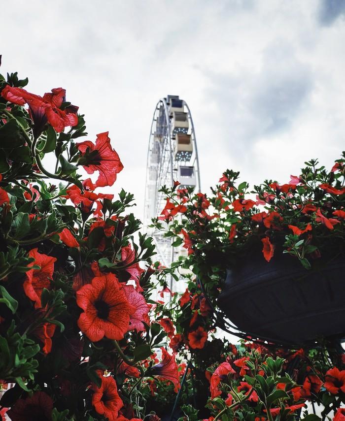 Колесо обозрения в цветочном обрамлении Мобильная фотография, Начинающий фотограф, Колесо обозрения