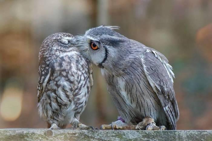 Поцелуйчики.