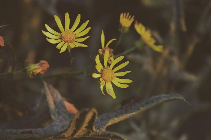 Яркие весенние фотографии из леса. Природа, Цветы, Весна, Фотография, Горячее, Лес, Длиннопост