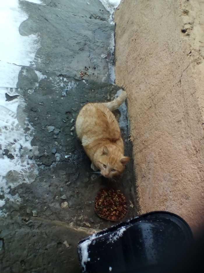 О человеческой жестокости, котике, которому сломали хвост Тула, Кот, Помощь, Жестокость, Видео, Длиннопост