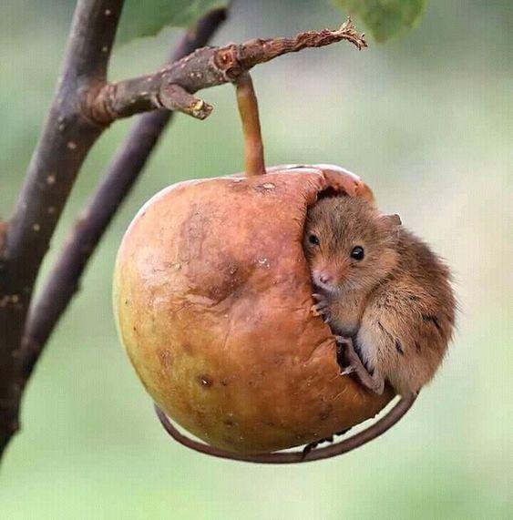 Ты не мышь... если не умеешь прятаться в продуктах питания. Мышь, Маскировка