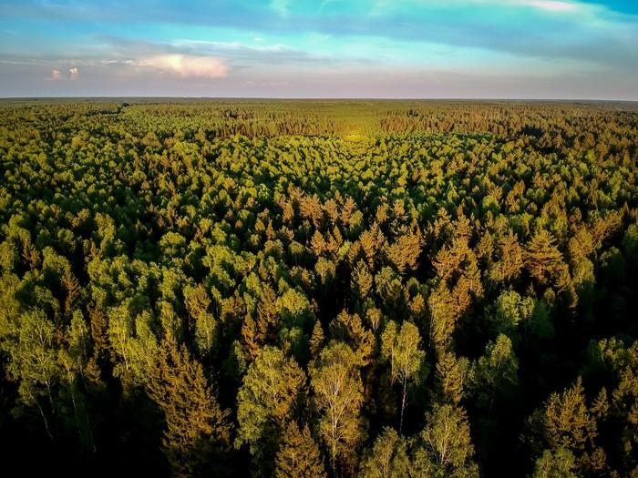 Природа Фотография, Природа, Лес, Заброшенное, Красота, Длиннопост