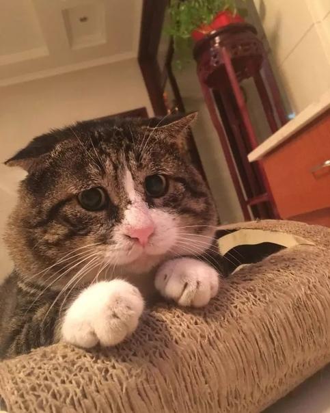 Просто эмоциональный кот Кот, Эмоции, Милота, Длиннопост