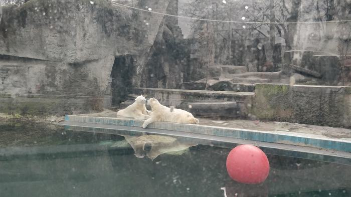 Медвежья нежность Зоопарк, Медведи любовь