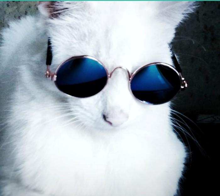 Очки для кота Aliexpress, Котомафия, Кот, Очки, Лепс