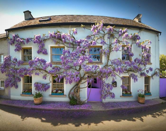 Дом в Ирландии обняла мать природа