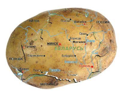 Нам важен её внутренний мир Беларусь, Белоруссия, Картофель, Селекция, Внутренний мир