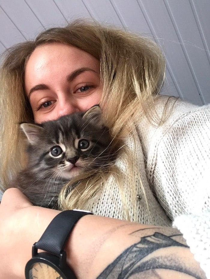 Котёнок ищет дом (Минск) Кот, Минск, Беларусь, Длиннопост, Помощь животным, Без рейтинга, Котята