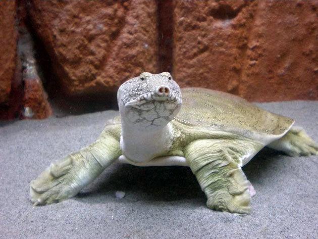 Пост с черепахой Черепаха, Исполнение желаний