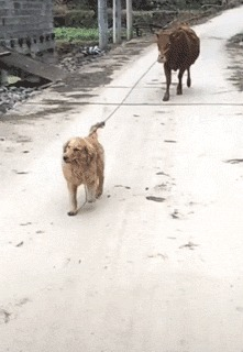 Хороший мальчик Kat Swenski, Гифка с предысторией, Гифка, Перевод, Собака, Длиннопост