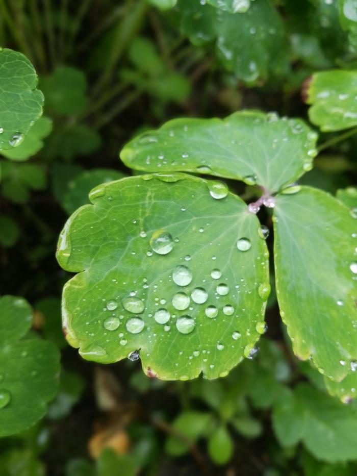 Растеньице после дождя Фотография, Фото на тапок, Растения, После дождя, Huawei