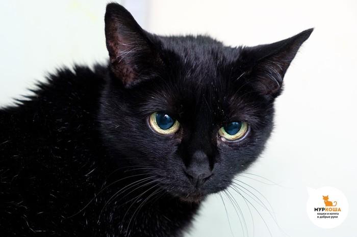 Двадцатилетняя кошка Ларан спустя две недели в приюте обрела дом и хозяйку! Приют муркоша, Муркоша, Кот, Помощь животным, Приют для животных