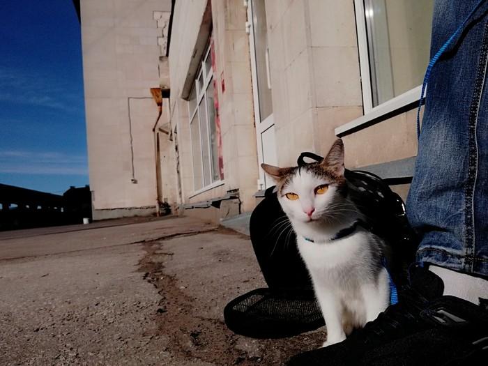 Найдена кошка Самара Потеряшка, Самара, В добрые руки, Животные, Без рейтинга, Длиннопост, Кот