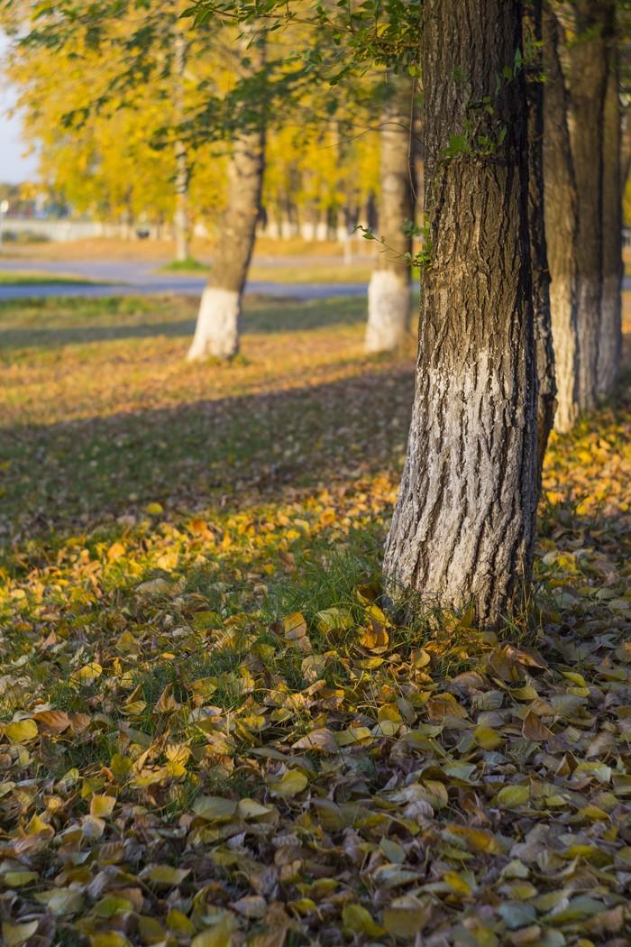 Осенний вечер. Осень, Гелиос44м, Советская оптика, Советские объективы