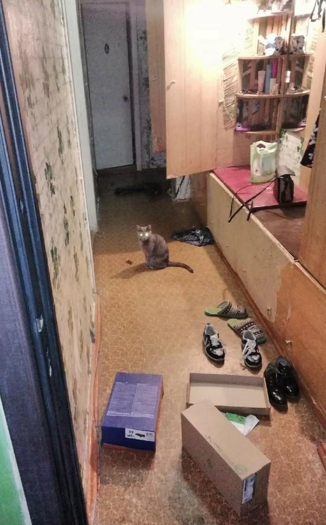 Ну привет, хозяйка. Кот, Беспорядок, Домашние животные