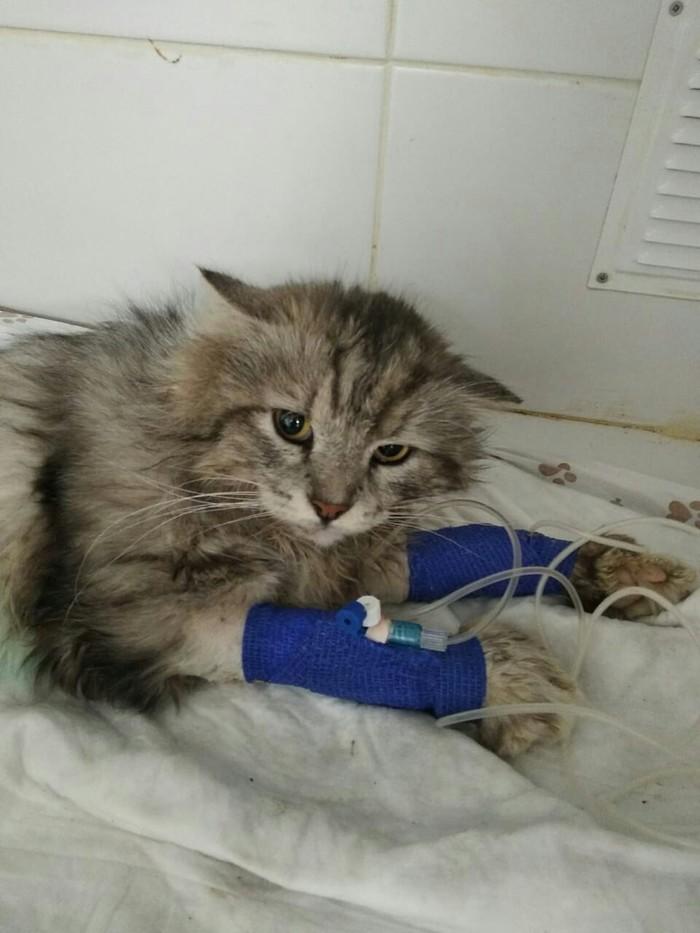 Кот ищет дом В добрые руки, Московская область, Кот, Спасение животных, Длиннопост, Без рейтинга