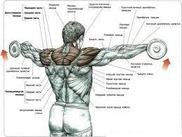 Как сделать плечи больше и шире? Спорт, Питание, Качалка, Спортзал, Длиннопост
