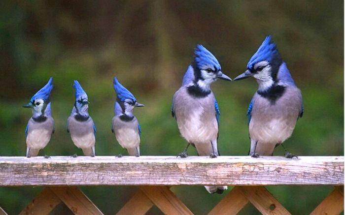 Отцы и дети Птицы, Родители, Дети, Природа, Философия