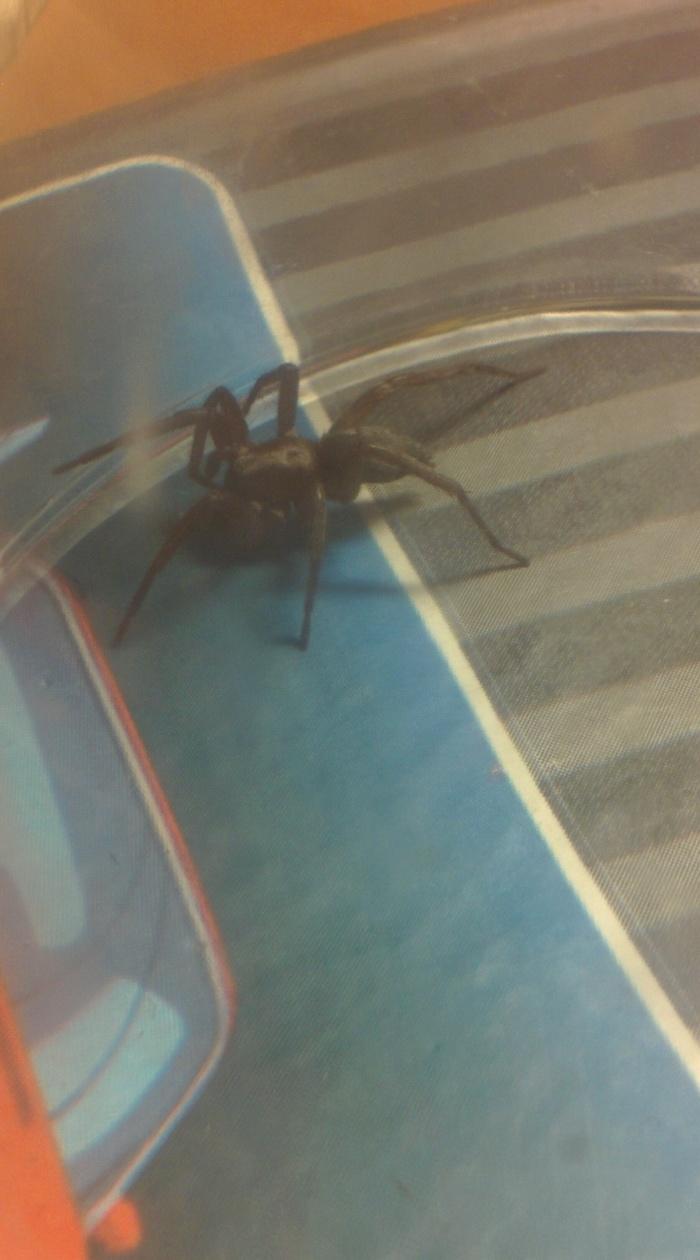 """Поймал паука, вижу впервые такого, кто знает? Может сделать """"кусь""""?"""