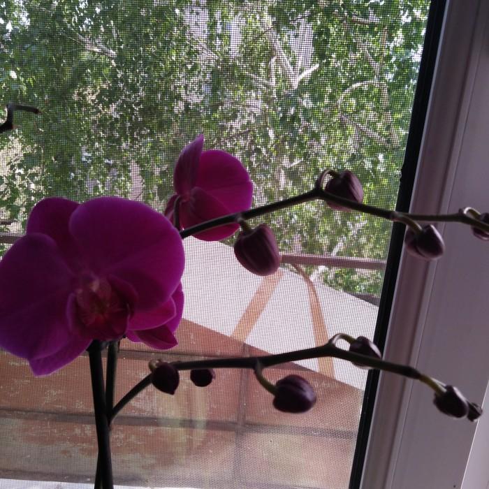 Орхидеи. Орхидеи, Цветы