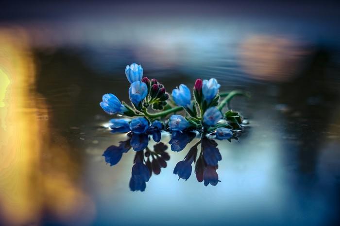 Ракурс Фотография, Красивое, Ракурс, Отражение, Вода, Цветы, Sony, Макро