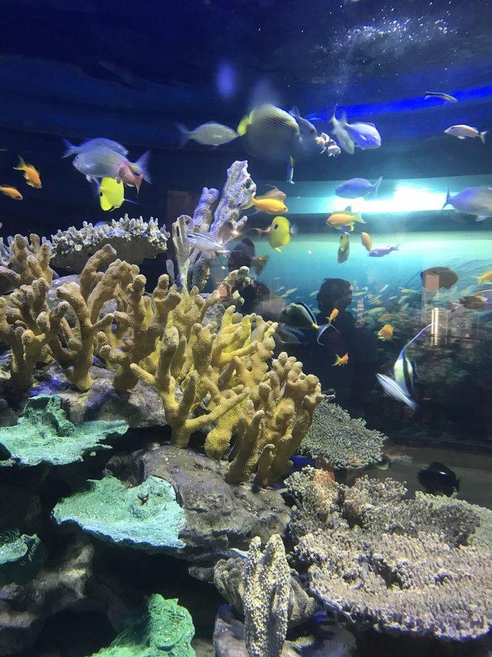Красивый аквариум Аквариум, Аквариумные рыбки, Аквариумистика, Длиннопост