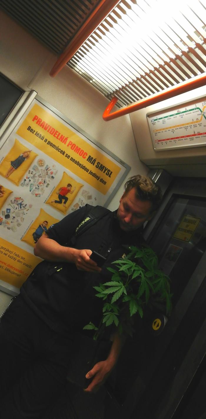Обычный день в чешском метро. Чехия, Марихуана, Трава