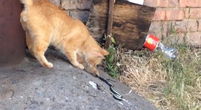 В Астрахани змея заползла во двор многоэтажки Астрахань, Южная волна, Кот, Животные, Змея, Ядовитая змея, Общество