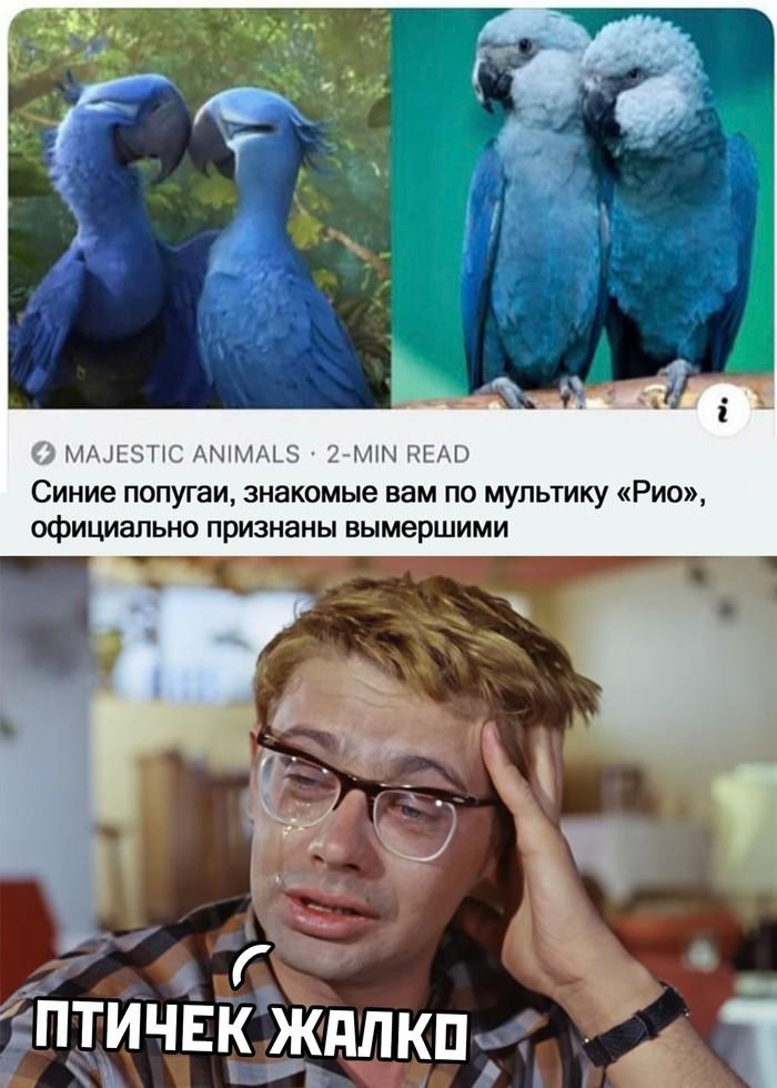Жалко птичек