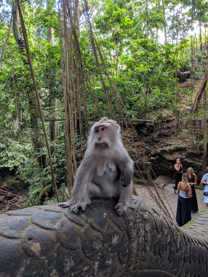 Дождливый Бали. #1 Обезьяны и рис Бали, Отпуск, Путешествия, Сказочноебали, Видео, Длиннопост