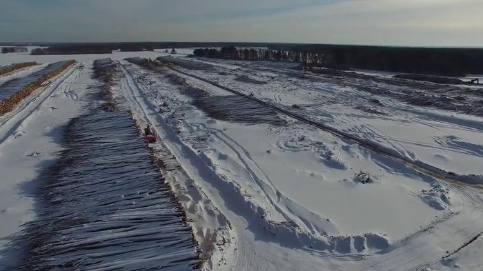В Томской области власти отдали 2 млн. гектаров леса за бесценок...[Устаревшая информация] Томск, Лес, Тайга, Коррупция, Негатив