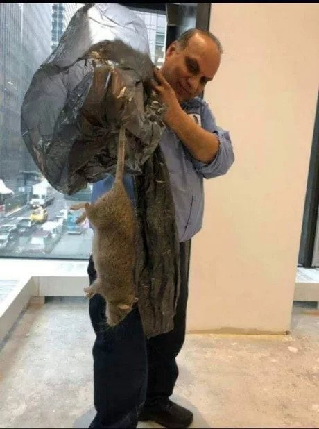 Нью-Йоркская крыса