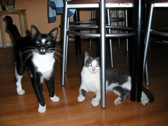 Кошачья справедливость Кот, Котомафия, Животные, Длиннопост