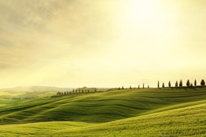 10 интригующих древнеримских продуктов питания Древний Рим, Еда, Интересное, Кулинария, Познавательно, Факты, Кухня, Длиннопост